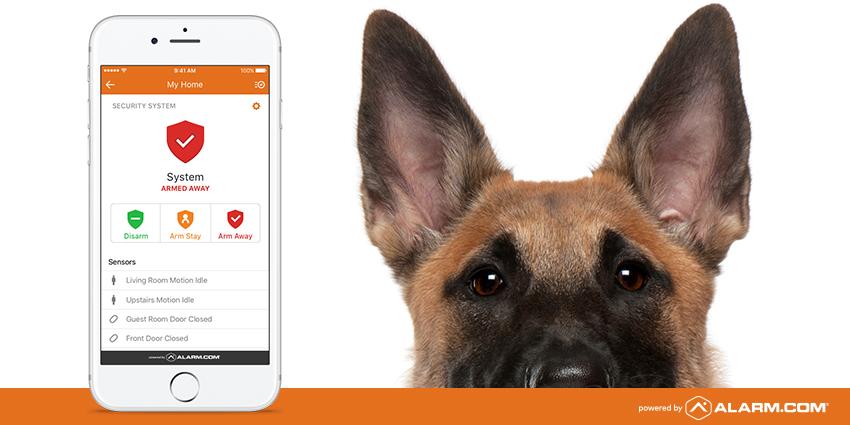 dog-security-1